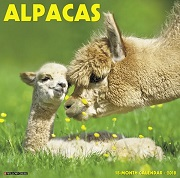Alpacas Wall Calendar 2018 - Willow Creek Press
