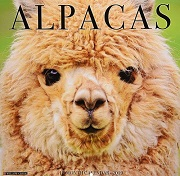 Alpacas Wall Calendar 2019 - Willow Creek Press