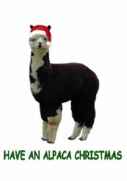 Alpaca Greeting Cards - Send your Greetings with an Alpaca ...