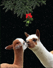 Make New Friends Christmas Alpaca Greeting Card - Christmas Alpaca ...