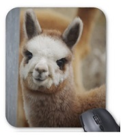Cute Alpaca Mousepad for sale by Walnut Creek Alpacas