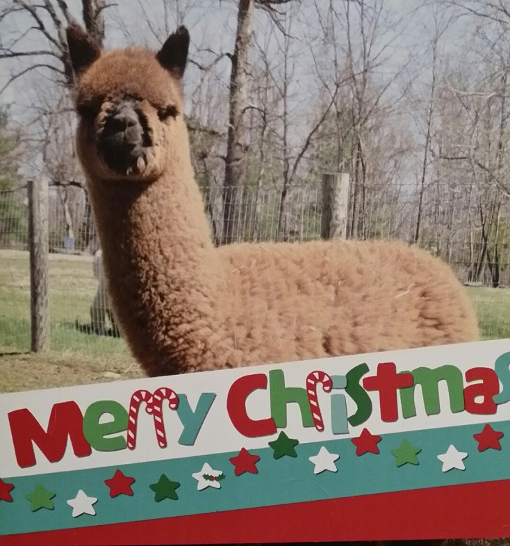Photos of Alpaca from Make My Day Farm