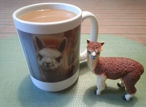 Alpaca drinks coffee