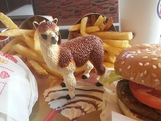Ruffo the Alpaca enjoying a Burger King meal