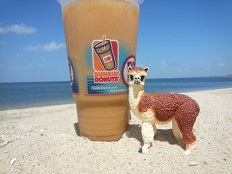 Ruffo at Sunken Meadow Beach with a Dunken Donuts Iced Coffee